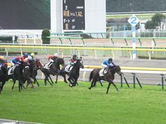 20141130 東京3R 2歳未勝利 トーセンカナロア 13