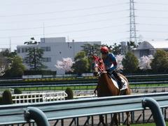 20150404 阪神4R 3歳未勝利 レーヌドブリエ 15