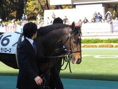 20131116 東京 サンドラバローズ04