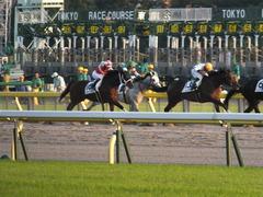 20141018 東京12R ショウナンアポロン 15