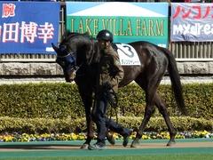 20180218 東京2R 3歳未勝利 ダノンシャレード 03
