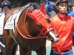 20170520 東京2R 3歳未勝利 パイオニアワーク 12