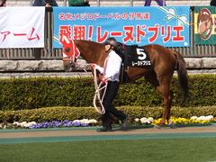 20160213 東京9R 調布特別(1000) レーヌドブリエ 04