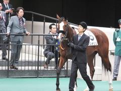 20161030 東京1R 2歳未勝利 プンメリン 09