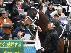 20150321 中山10R 韓国馬事会杯 ショウナンアポロン  10