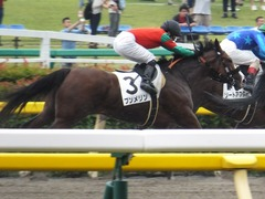 20170625 東京1R 3歳牝馬未勝利 プンメリン 28