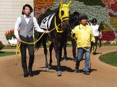 20151025 京都4R 2歳メイクデビュー ブリリョドソル 04
