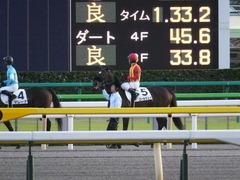 20141025 東京12R ゴールウェイ 12