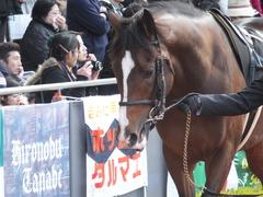 20141207 中京9R 栄特別 ビップレボルシオン 06