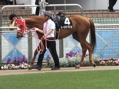 20160409 中山9R 野島崎特別 (1000牝) レーヌドブリエ 04