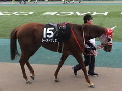 20170211 東京9R テレビ山梨杯(牝1000) レーヌドブリエ 14