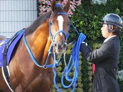 20151025 京都11R 菊花賞(G1) マッサビエル 16
