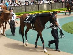 20140517東京9R オウケンブラック 06