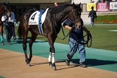 20191110 東京2R 2歳牝馬未勝利 ミヤコシャンティ 14