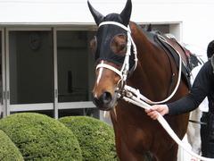 20150321 中山10R 韓国馬事会杯 ショウナンアポロン  03