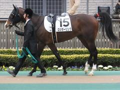 20150222 東京4R 3歳未勝利 ロジダーリング 01