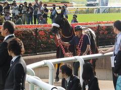 20140503 東京11R 青葉賞 ショウナンラグーン 18