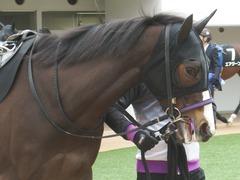 20190323 中山9R ミモザ賞 3歳牝馬(500) トロハ 06
