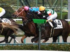 20161002 阪神7R (500) レーヌドブリエ 22