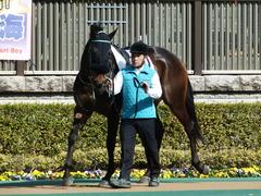 20180217 東京3R 3歳未勝利 ハッピーテーラー 12
