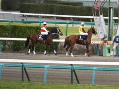 20150321 中山10R 韓国馬事会杯 ショウナンアポロン  12