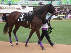 20190323 中山9R ミモザ賞 3歳牝馬(500) トロハ 05