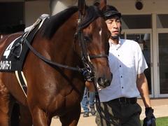 20150919 中山10R 松戸特別 ヴィルトグラーフ 02