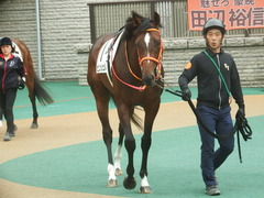 20190609 東京7R 3歳上1勝 ピンシェル 09