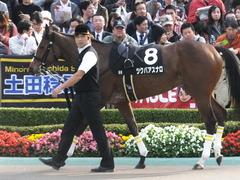 20151101 東京9R 精進湖特別 ツクバアスナロ 04