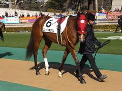 20150221 東京1R 3歳未勝利 フレンドマキシマム 06