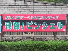 20190609 東京7R 3歳上1勝 ピンシェル 01
