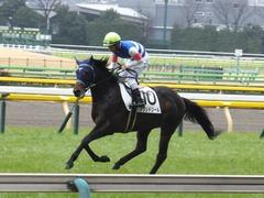 20160130 東京4R 3歳未勝利 アタンドリール 13