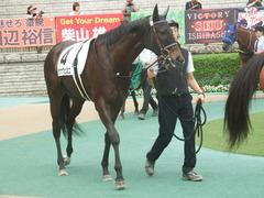 20190608 東京6R 3歳牝馬未勝利 ホウオウヒミコ 07