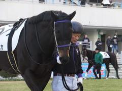 20170114 京都8R 4歳上牝馬500万下 サラマンカ 02