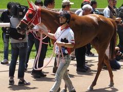 20150510 東京5R 3歳未勝利 レーヌドブリエ 21