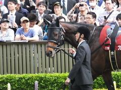 20160430 東京11R 青葉賞(G2) プロディガルサン 05