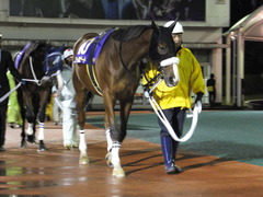 20141127 大井11R 勝島王冠(S3) ユーロビート 02