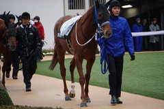 20200118 中山9R 菜の花賞 3歳牝馬1勝クラス シホノレジーナ 12