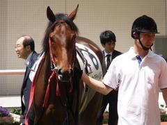20170603 阪神3R 3歳未勝利 フェアチャイルド 17