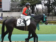 20160130 東京3R 3歳未勝利 アイルーロス 12