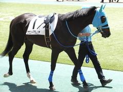 20150517 東京3R 3歳未勝利 サウンドアラムシャ 07