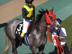 20170430 東京11R スイートピーS 3歳牝馬OP ミザイ 13
