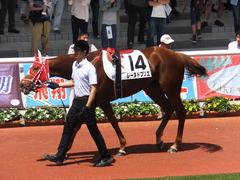 20160618 阪神8R 3歳上牝馬500万下 レーヌドブリエ 16