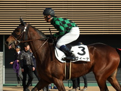 20171216 中山2R 2歳牝馬未勝利 ルフィーナ 14
