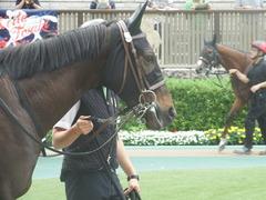20190608 東京6R 3歳牝馬未勝利 ホウオウヒミコ 10