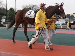 20151224 大井2R 2歳新馬 マルカンヒラリー 03