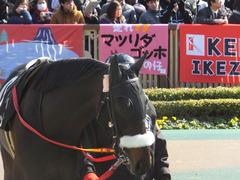 20140223 東京9R ショウナンラグーン 03