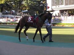 20121110 重賞挑戦 リメンバーメジロ 01