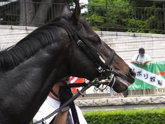 20150523 東京3R 3歳未勝利 コスモポッポ 04