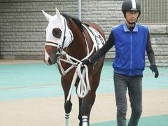 20181008 東京4R 2歳メイクデビュー オビワンズドーン 09